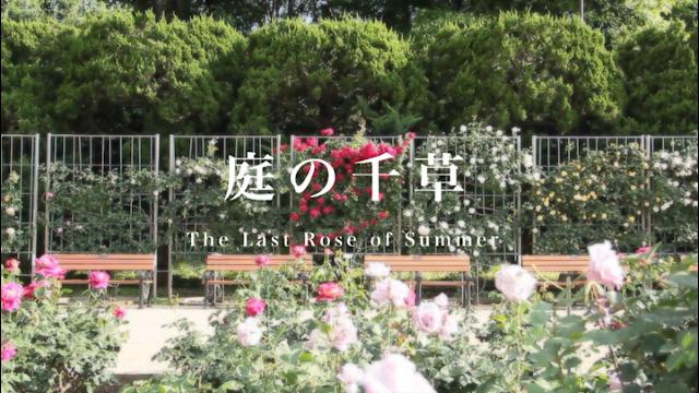 The Last Rose of Summer(アイルランド民謡)